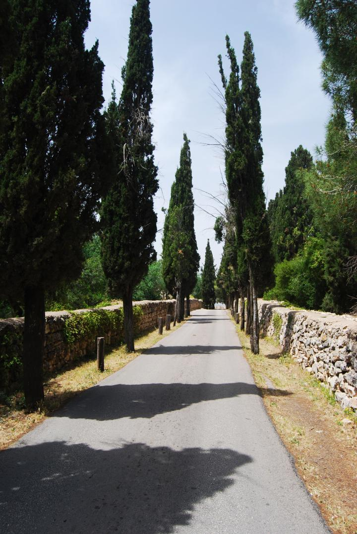 Access road to the Franciscan Monastery