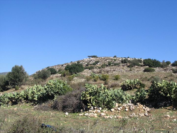View of Kefar Hannania from the south.