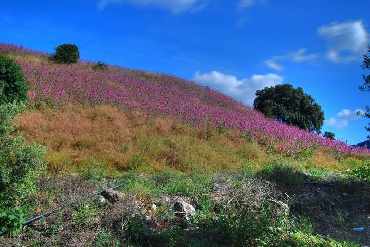 Wild flowers on Tell Meamar (Geva)