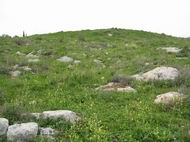View of the eastern hill of Khirbet Sharta/Sharata/Sirta- looking from the north side.