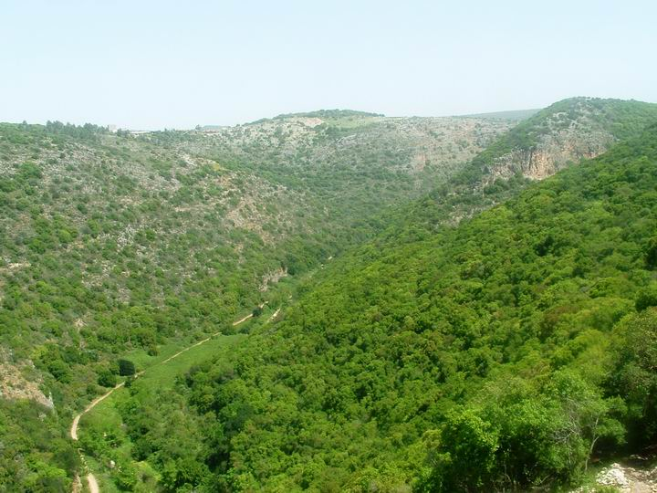 View of Kziv creek - from Monfort castle towards north.
